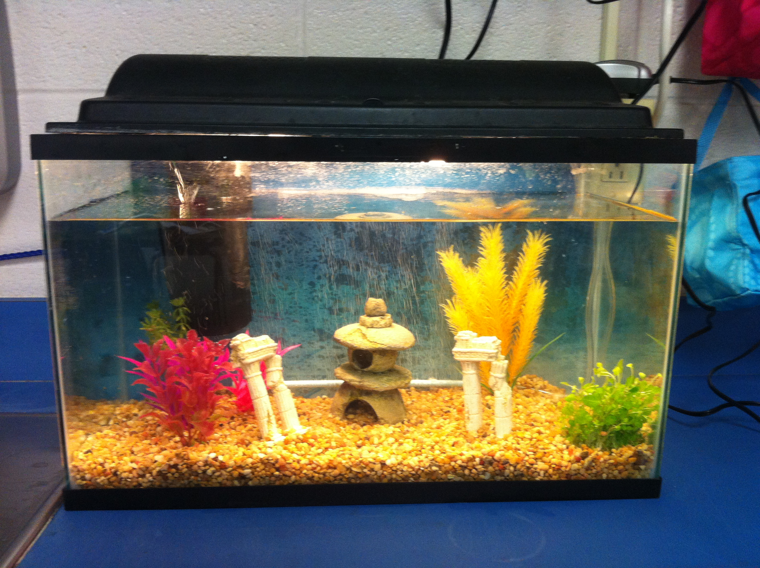 Classroom Aquarium Ideas ~ More classroom pictures kristen s kindergarten