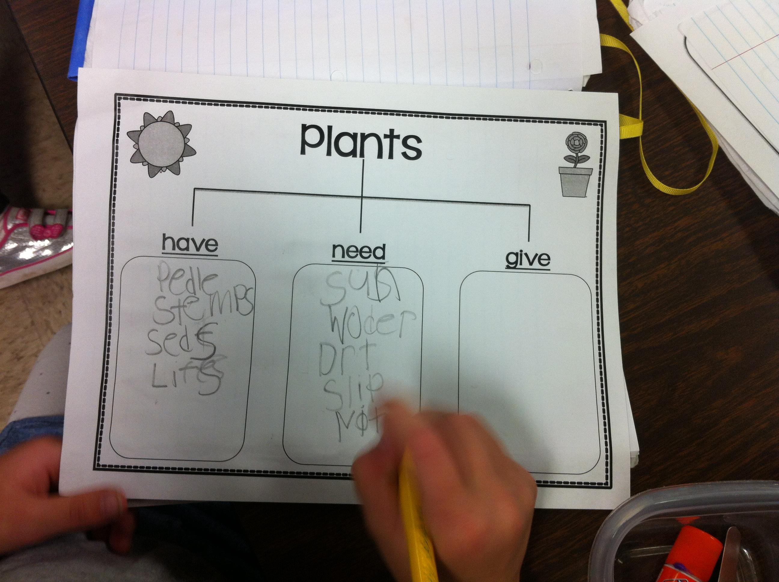 Plants | Kristen\'s Kindergarten