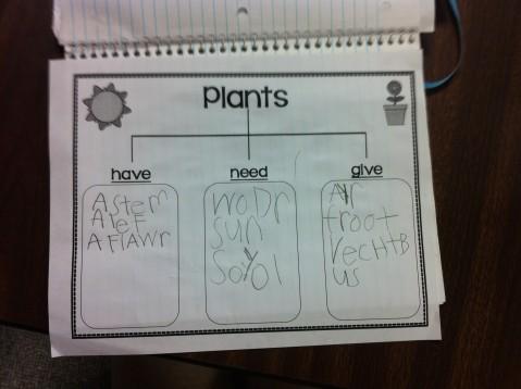 Plant Chart 3