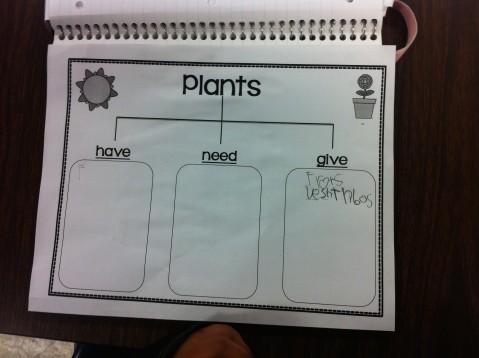 Plant Chart 4