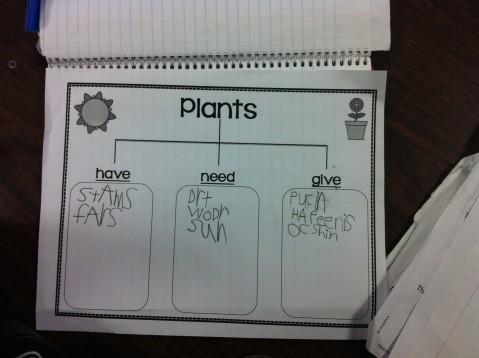 Plant Chart 5