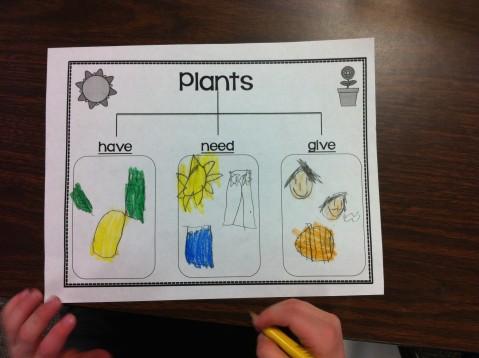 Plants Chart 6