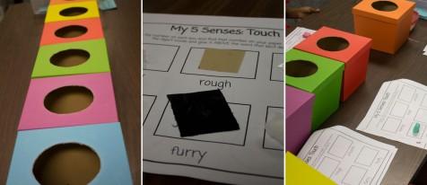exploring-our-senses-8